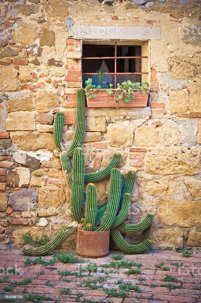 Cactus Against Rustic Facade House,Monticchiello, Val D'Orcia, Tuscany stock photo