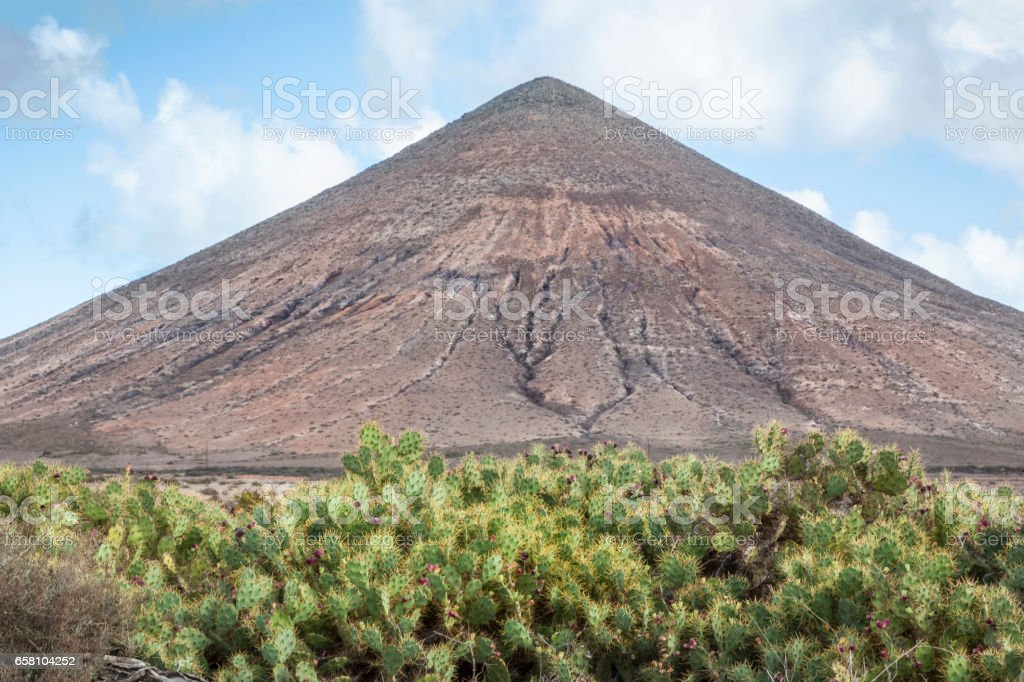 Cactus and a volcanic Landscape stock photo