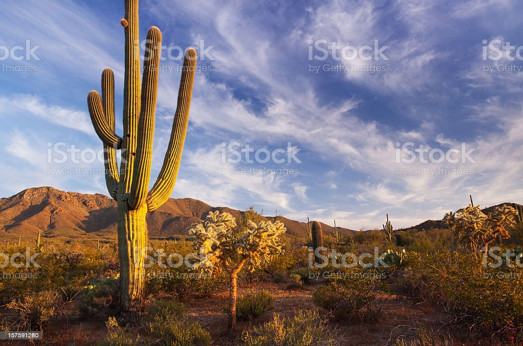 Cactus and desert landscape with bright blue sky background royalty-free stock photo
