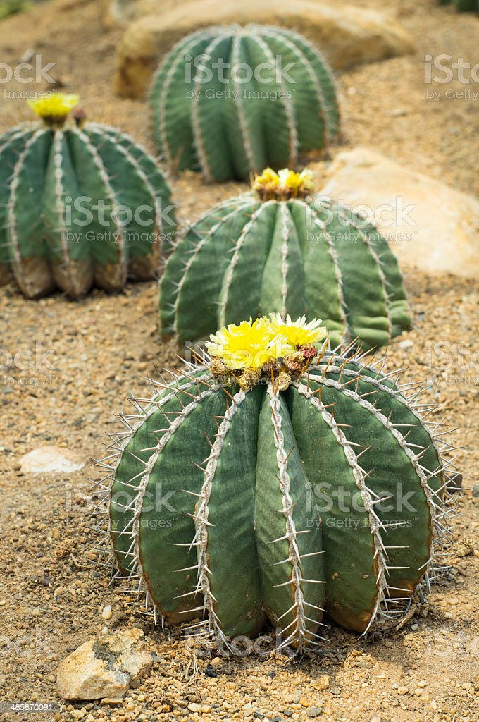 Cactus and flower in a garden royalty-free stock photo