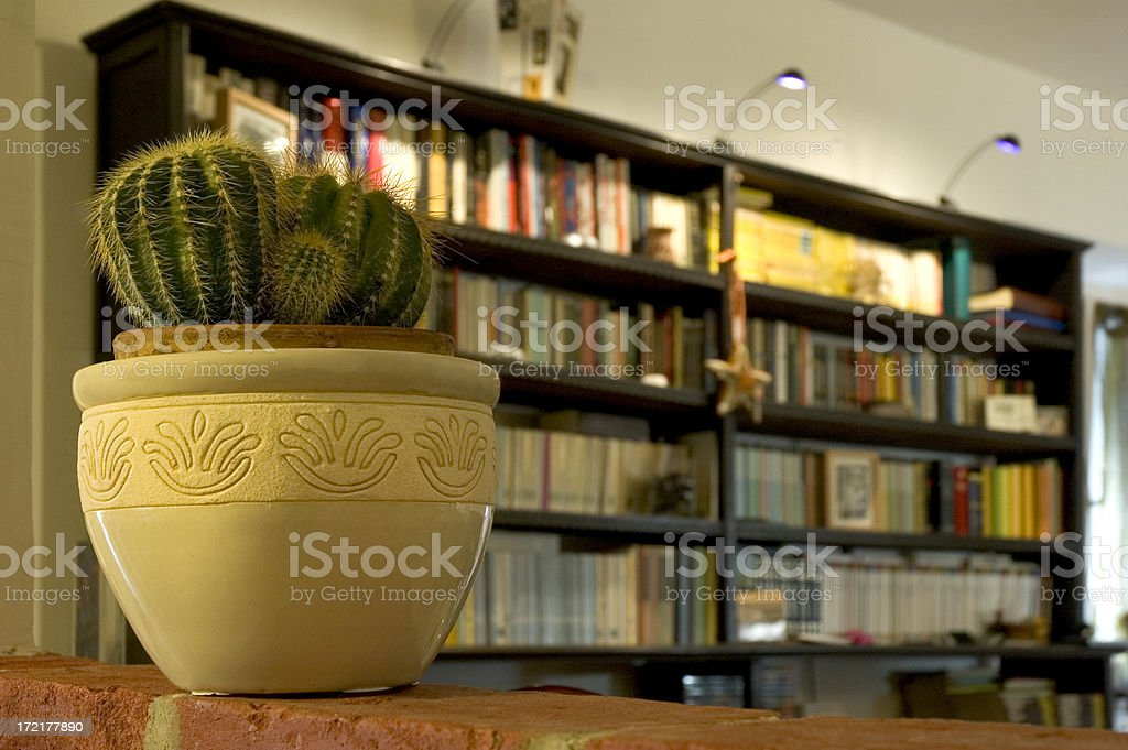Cactus and library royalty-free stock photo
