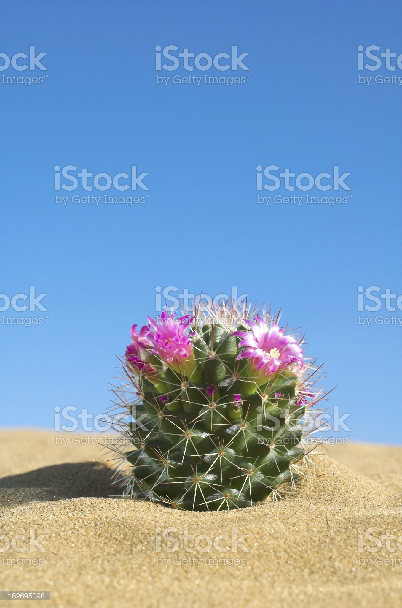 cactus and sand royalty-free stock photo