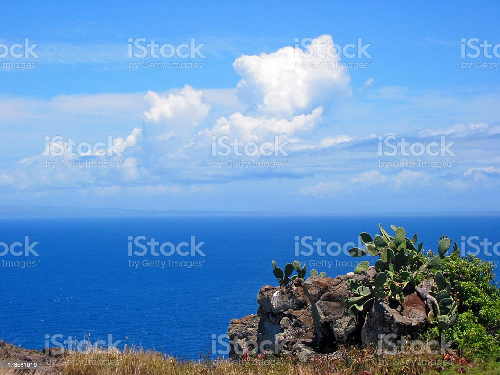Cactus and Sea royalty-free stock photo