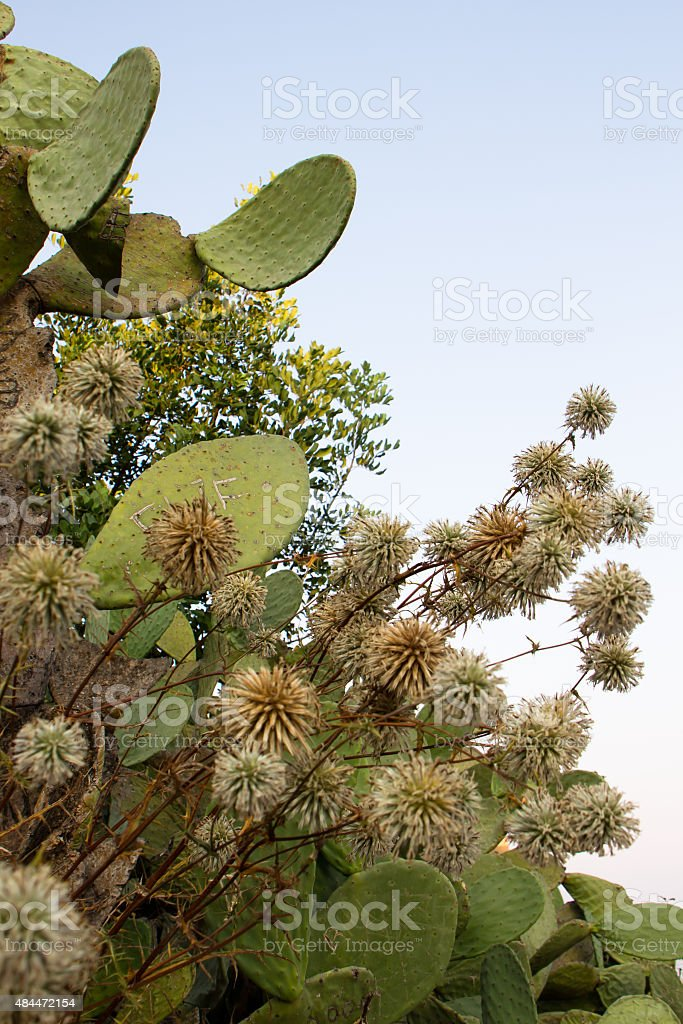 Cactus and sky stock photo