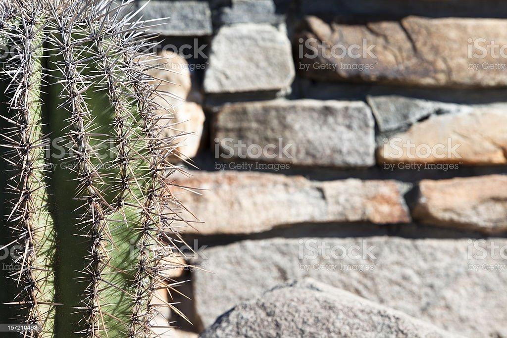 Cactus and Stone Background royalty-free stock photo