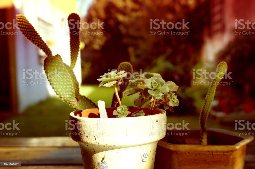 Cactus and succulents stock photo