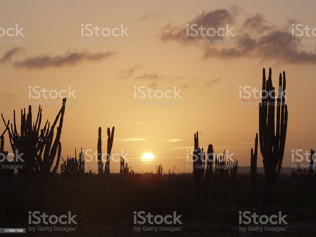 cactus and sunset royalty-free stock photo