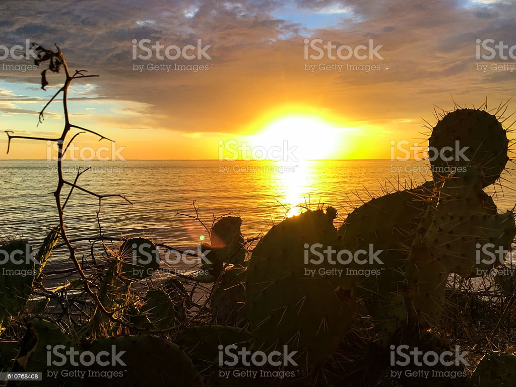 cactus and sunset stock photo