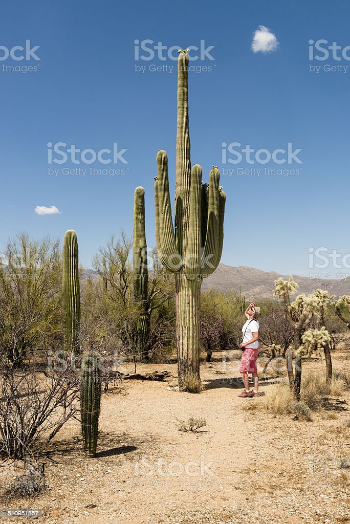 Cactus and woman stock photo