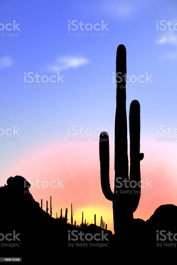 Cactus at sunrise royalty-free stock photo