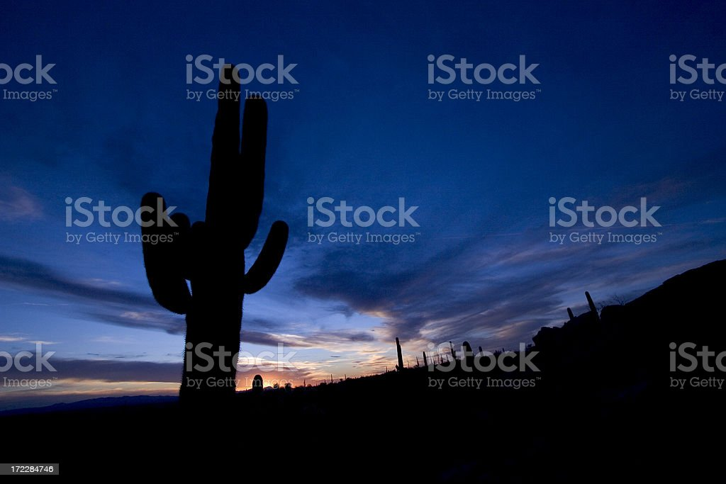 Cactus at sunset royalty-free stock photo