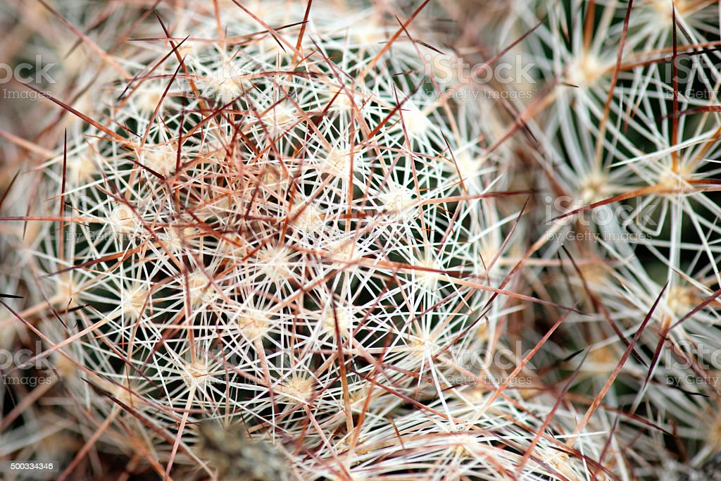 Cactus Background Abstract stock photo