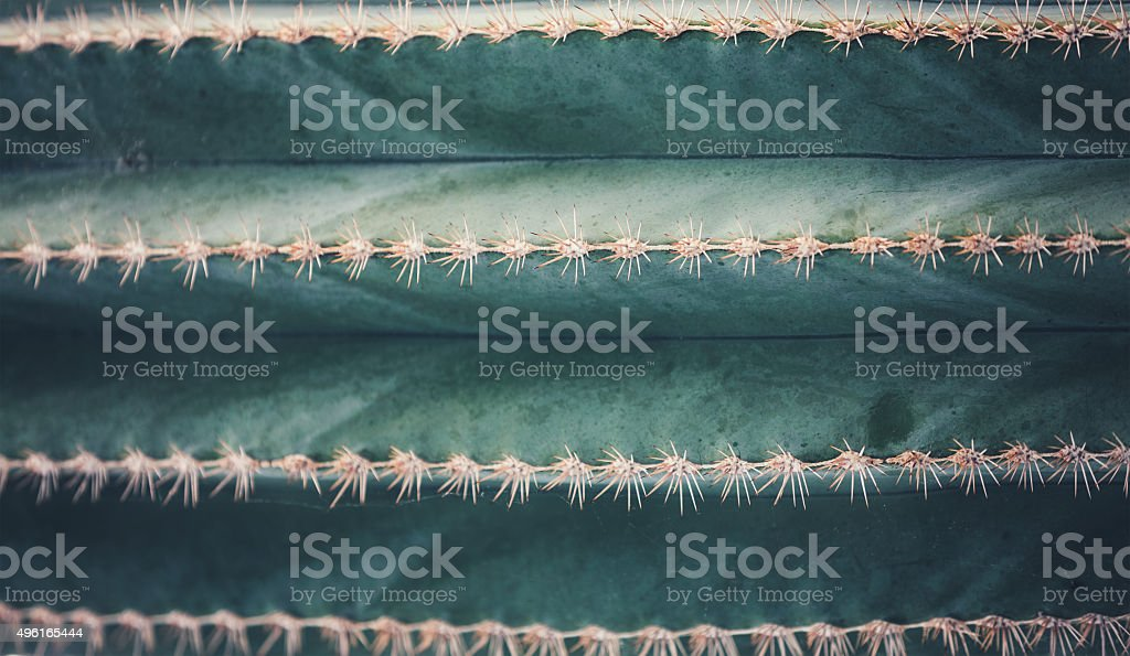 Cactus Background stock photo