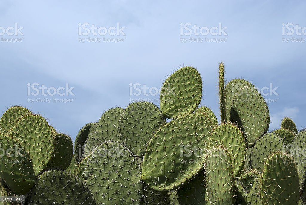 Cactus border royalty-free stock photo