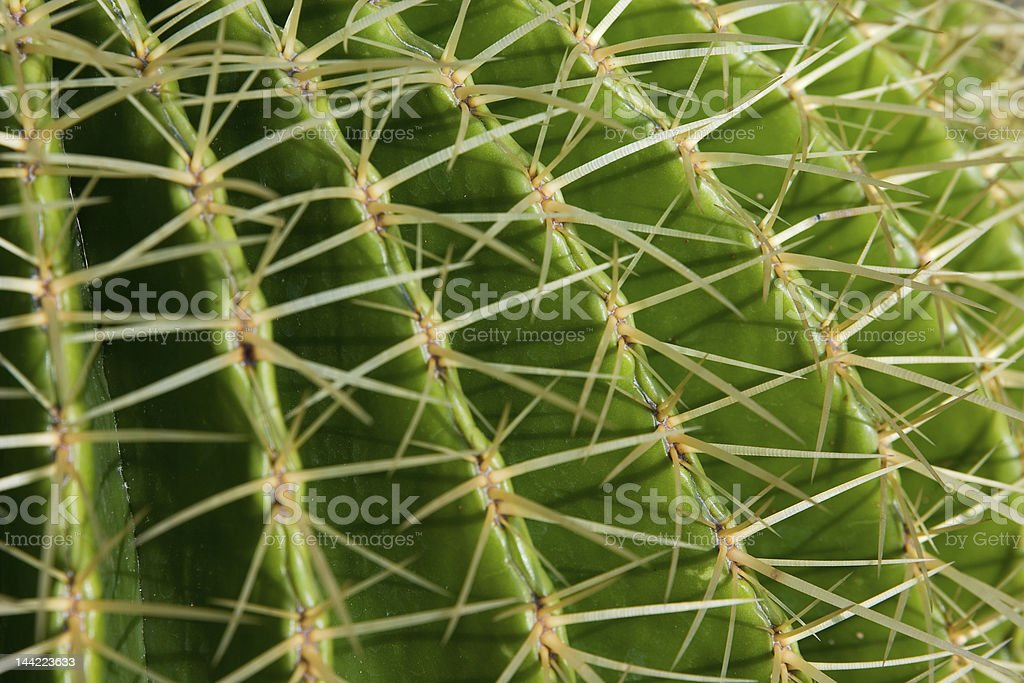 Cactus close-up royalty-free stock photo