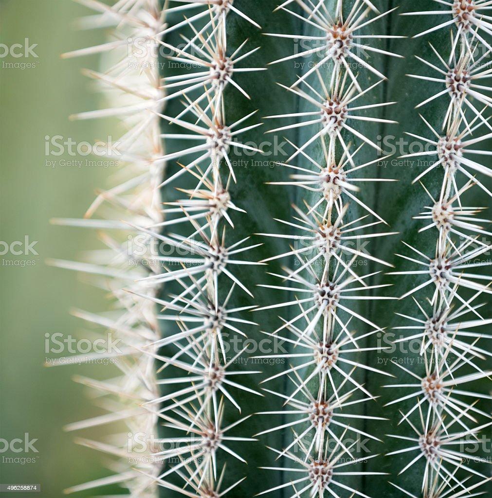 Cactus Close-up stock photo