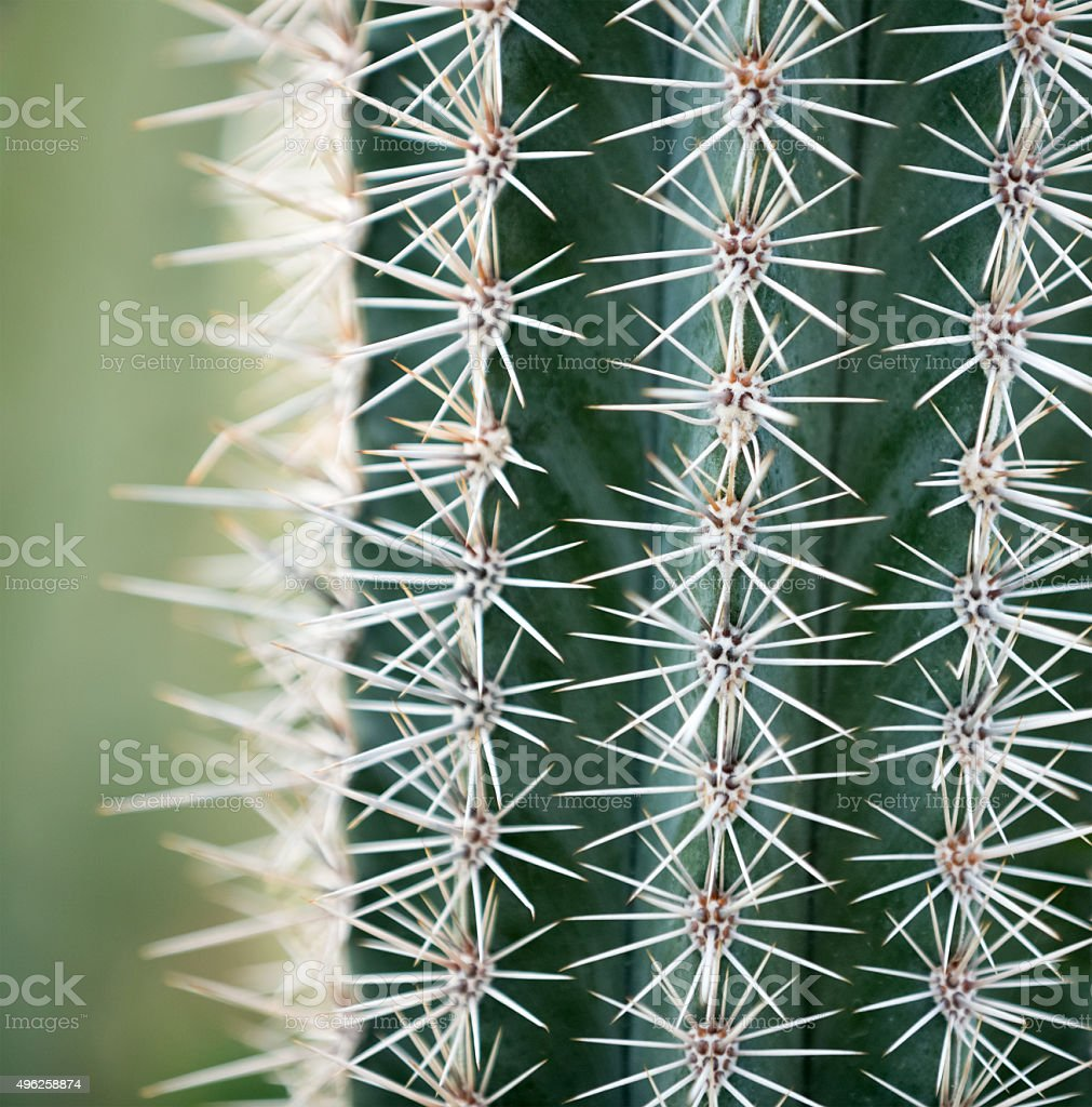 Cactus Close-up stock photo