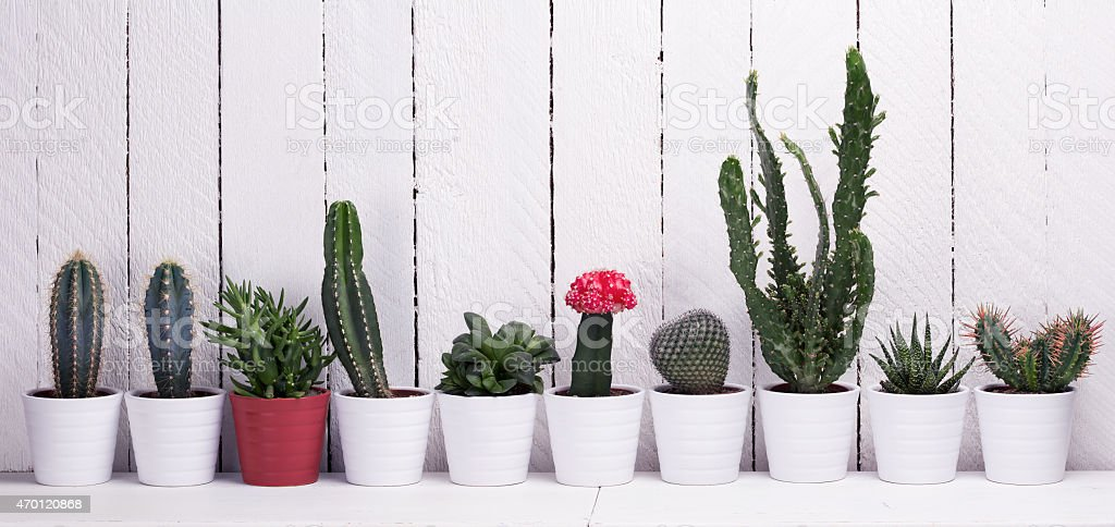Cactus collection stock photo