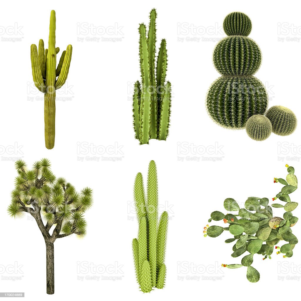 Cactus COLLECTION / SET Isolated on Pure White Background (72MPx-XXXL) royalty-free stock photo