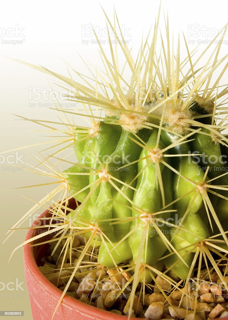 Cactus Color Background royalty-free stock photo
