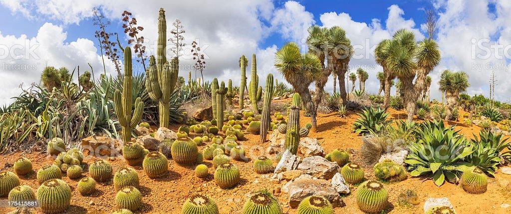 Cactus Country stock photo