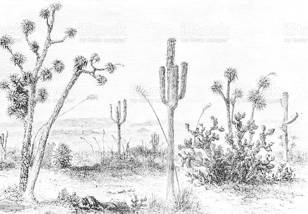 Cactus desert hand drawn illustration stock photo