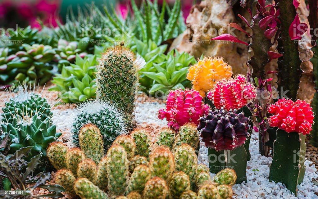 Cactus desert plant in a botanical garden stock photo