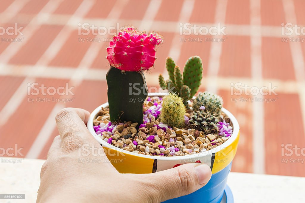 Cactus desert plant in pot stock photo