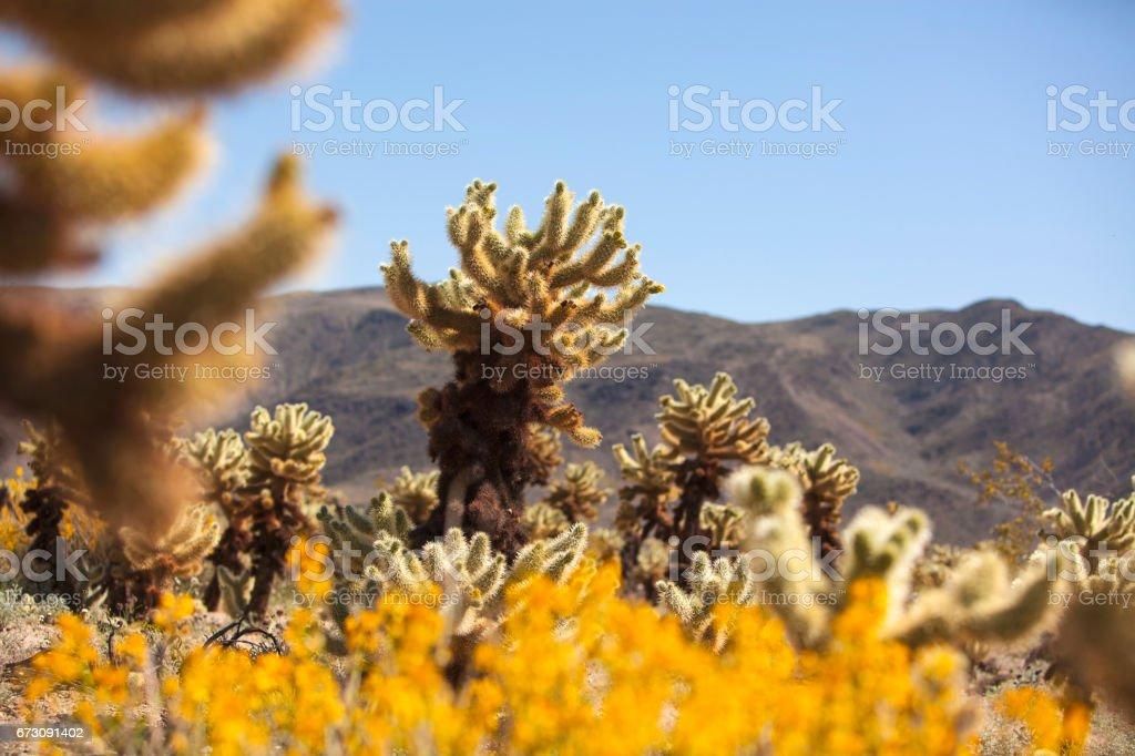 Cactus Desert Scenics stock photo