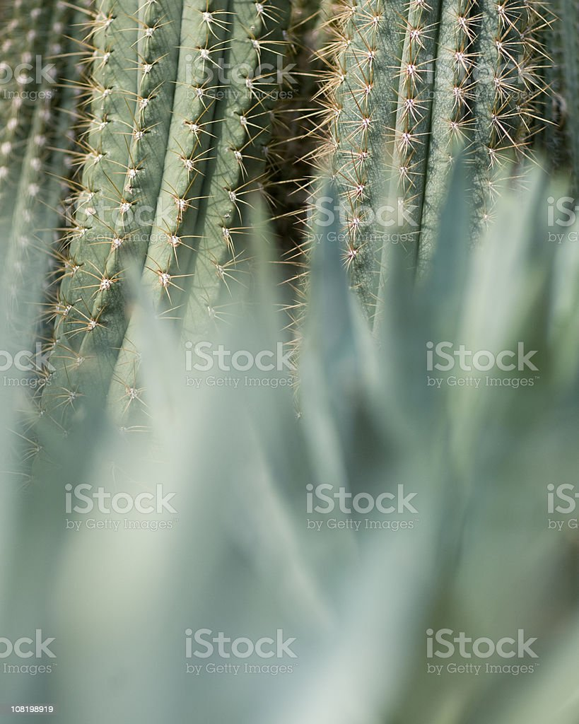 Cactus detail royalty-free stock photo