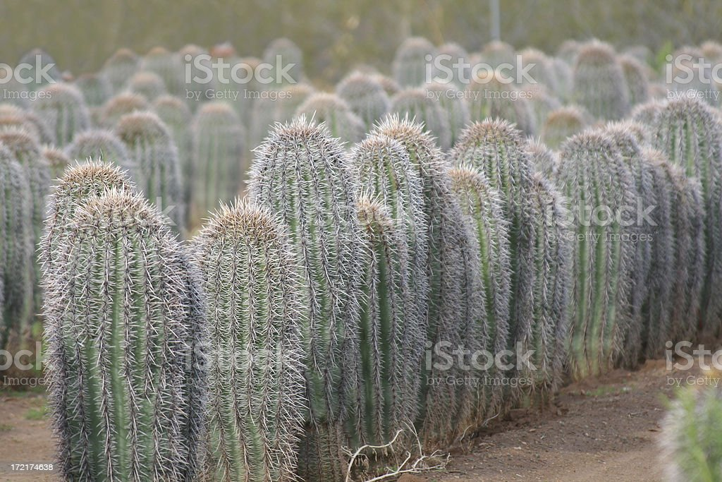 Cactus Farm stock photo