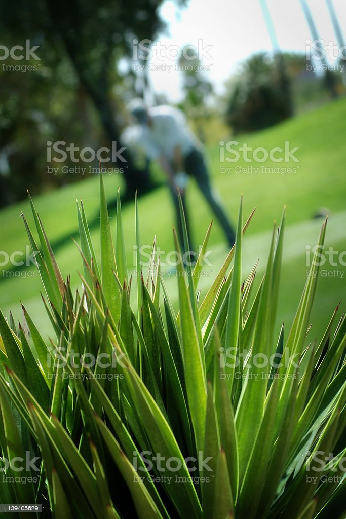 Cactus Foreground - golf course royalty-free stock photo