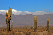 Cactus forest, Cardones National Park, Cachi, Argentina