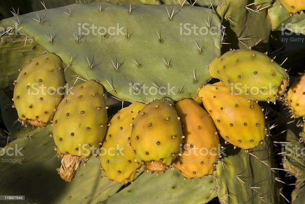 Cactus Fruits royalty-free stock photo