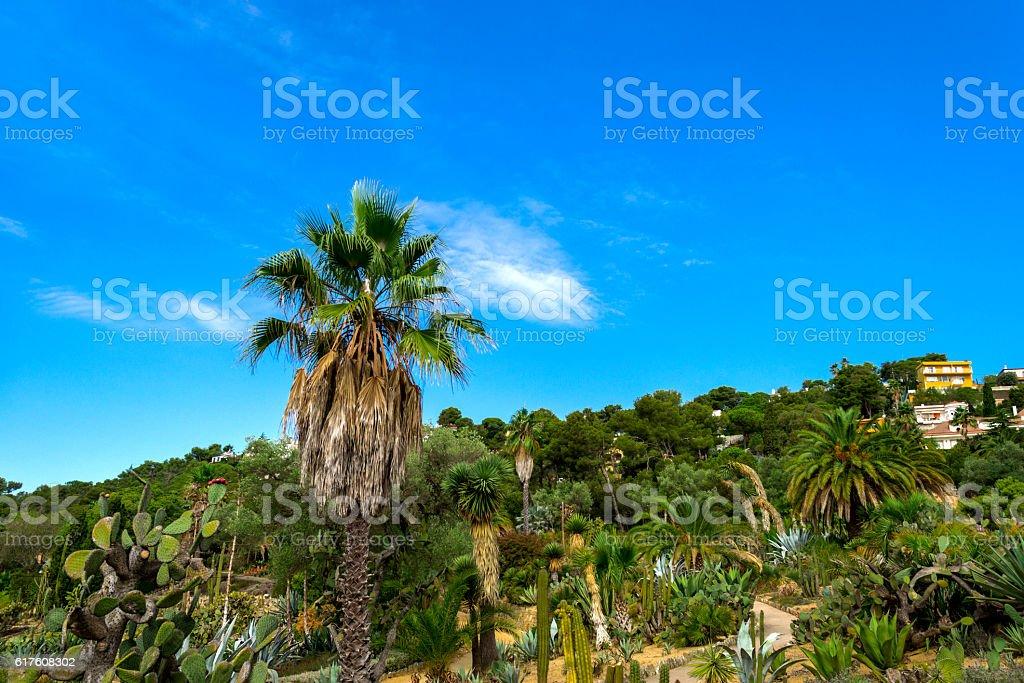 Cactus garden in the Lloret de mar stock photo