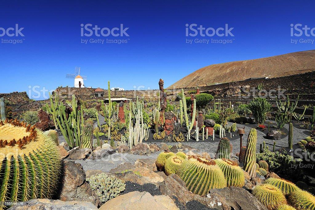 Jardin de Cactus stock photo