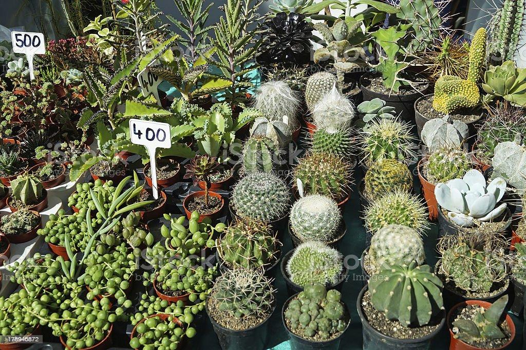 cactus garden royalty-free stock photo