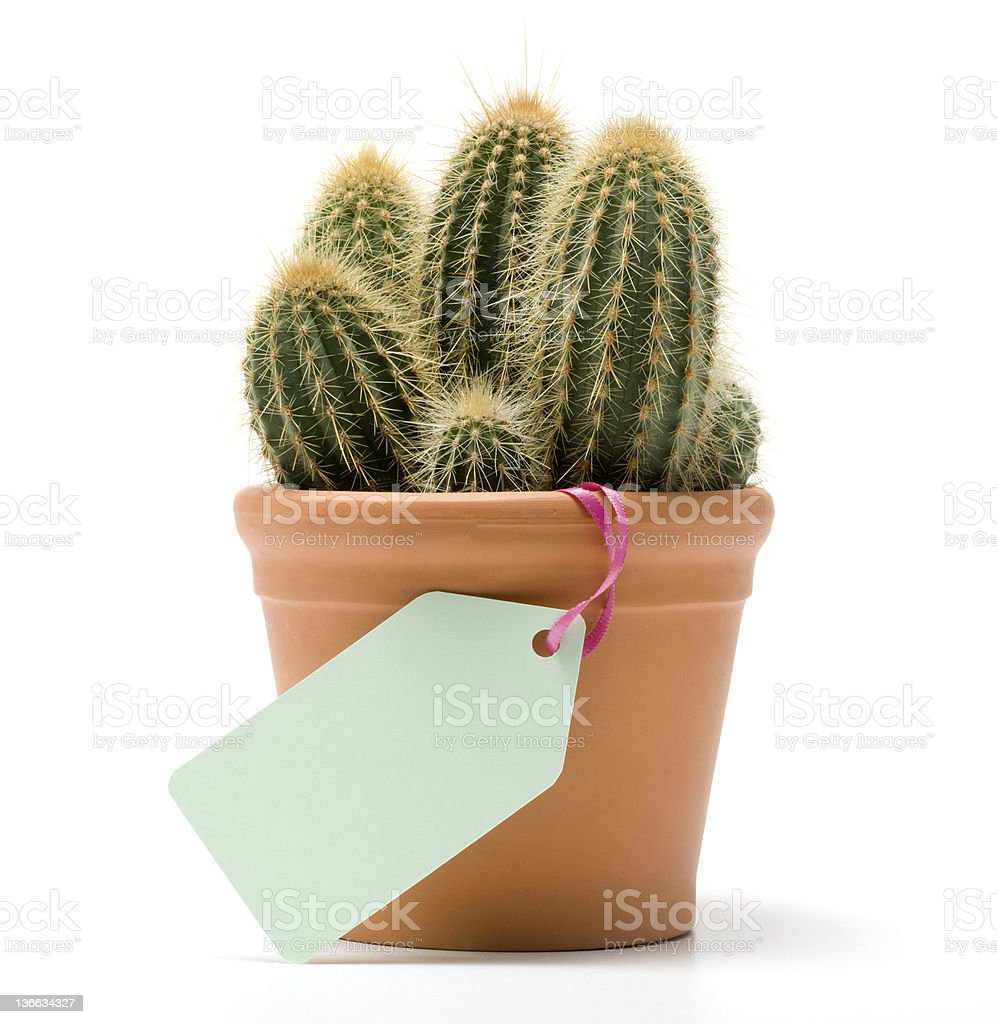 Cactus Gift royalty-free stock photo