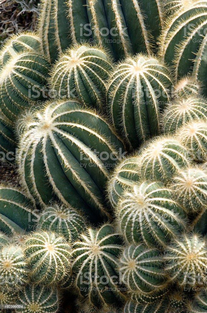 Cactus group stock photo
