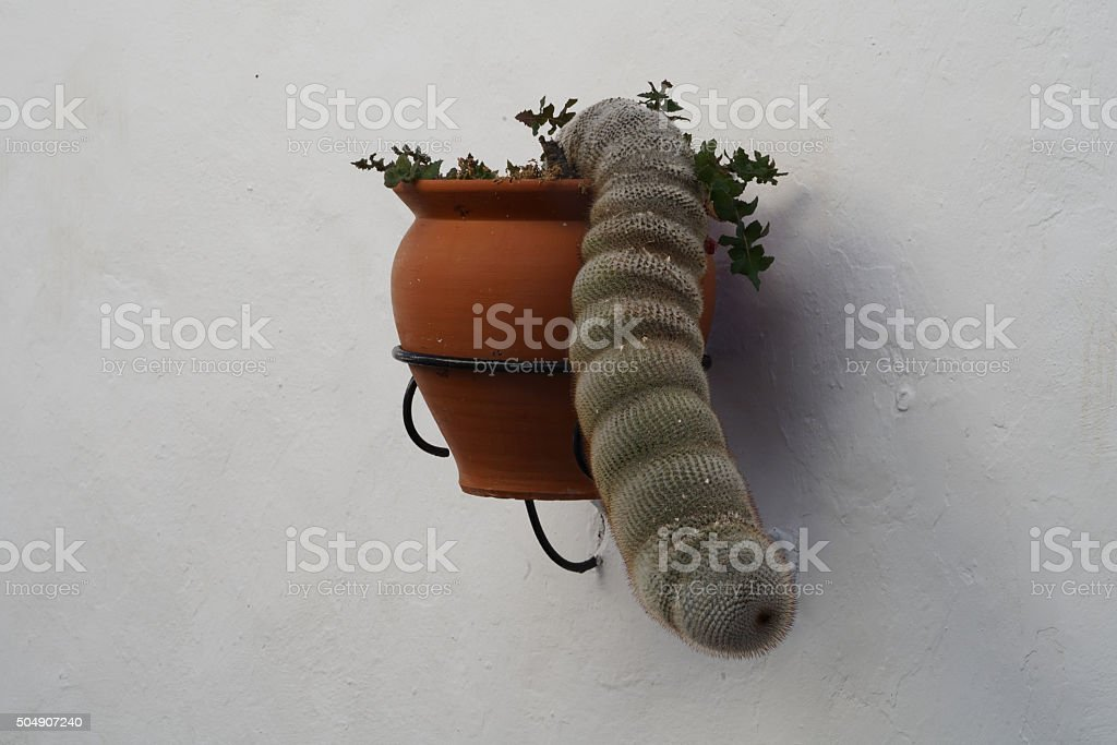 cactus hanging like a trunk stock photo