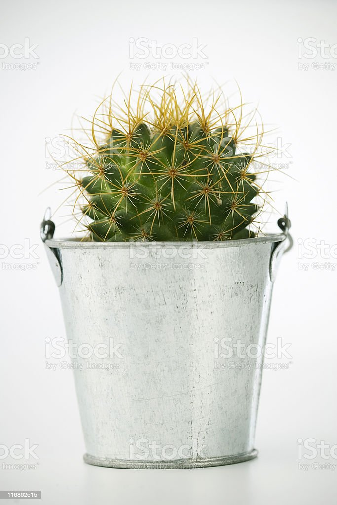 Cactus in a cube royalty-free stock photo