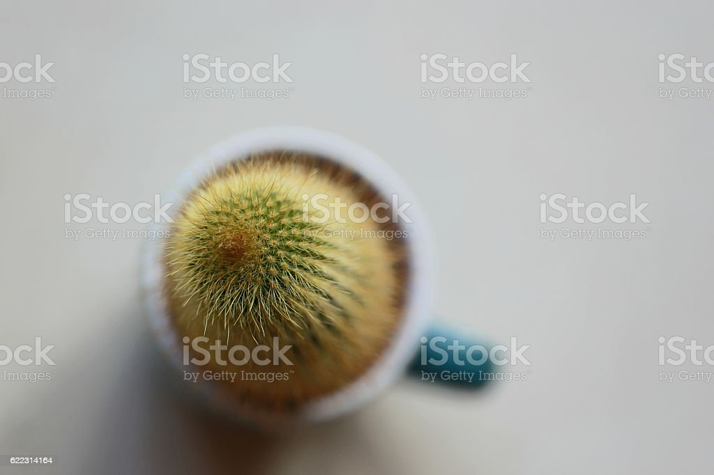 Cactus in a Cup. stock photo