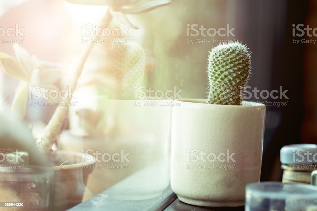 cactus in a cup put near window with sun light stock photo