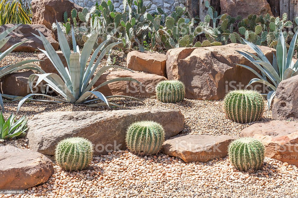 Cactus in botanical garden, model of desert garden. stock photo