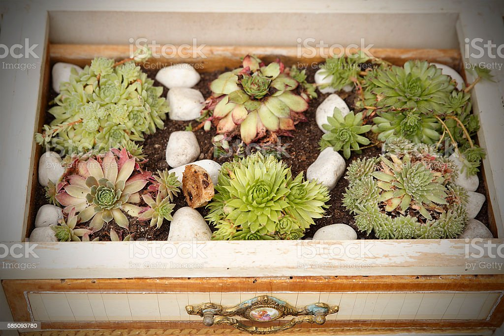 cactus in drawer stock photo