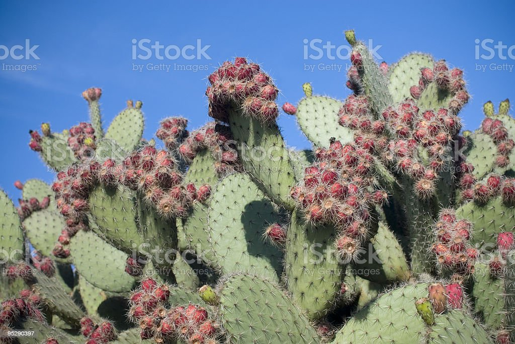 Cactus in front of blue sky stock photo