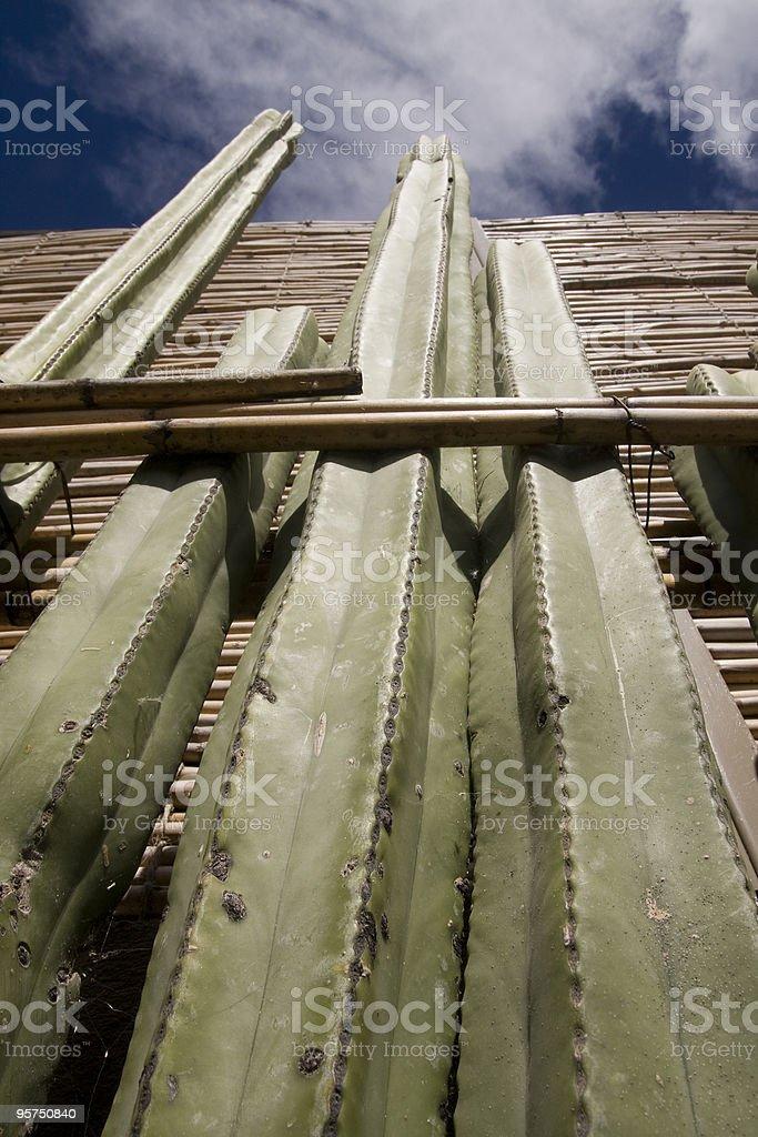 Cactus in Mitla stock photo