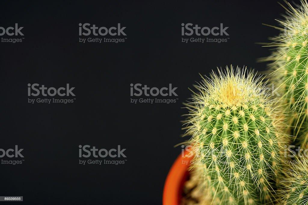 Cactus in orange pot stock photo