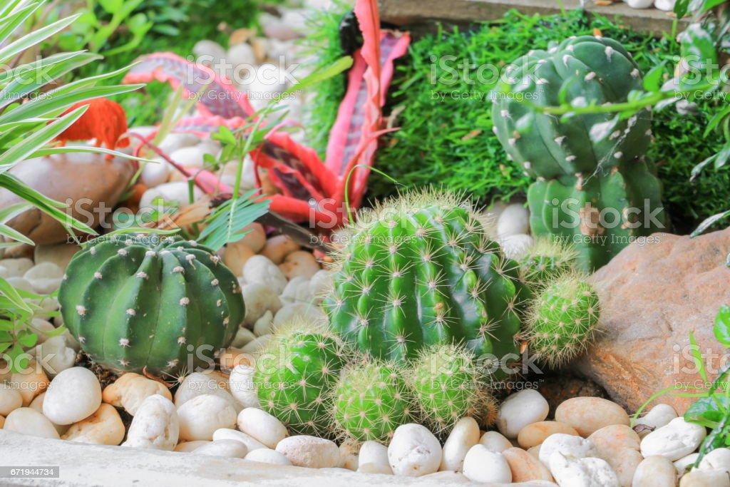 Cactus in stone park  beautiful stock photo