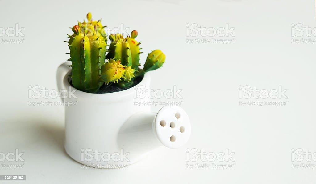 Kaktus in Blumentopf auf weißem Hintergrund. Lizenzfreies stock-foto